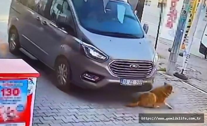 Gemlik'te bir sürücü sokak köpeğini ezip kaçtı!