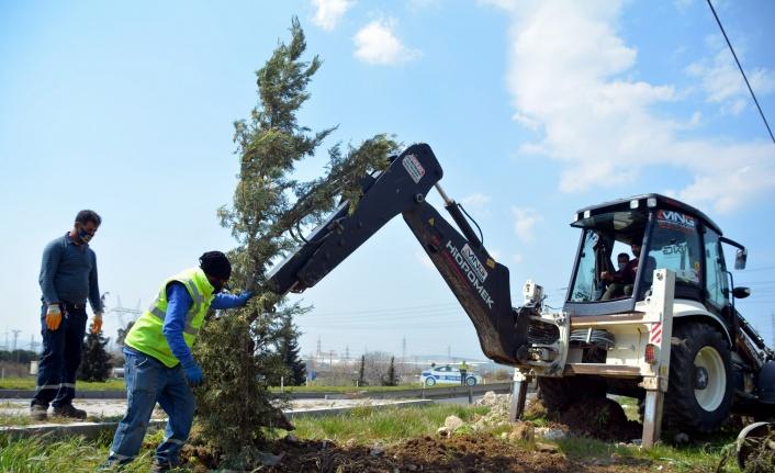 İzmir Aliağa'da yol kenarları ağaçlandırılıyor