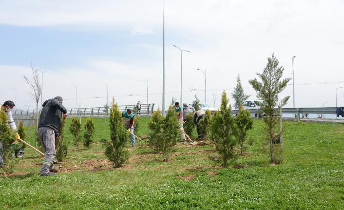 Malatya'da park ve refüjler yenileniyor