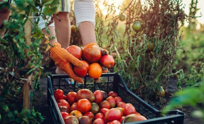 EİB'de Gıdada Sürdürülebilirlik UR-GE Projesi başlıyor
