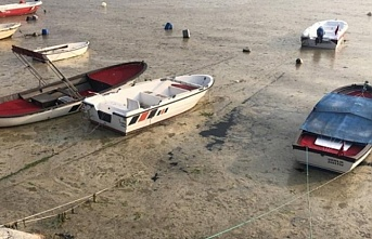 Gemlik Körfezi'nde balık ölümleri başladı...