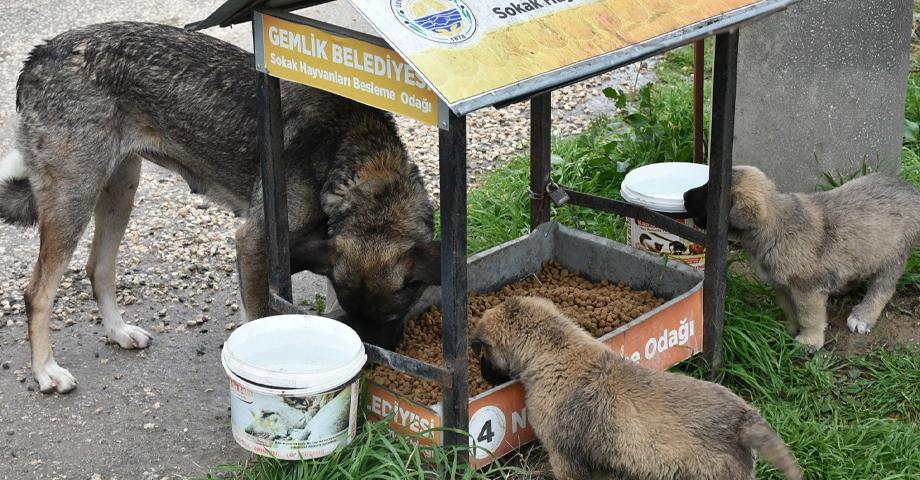 Gemlik Belediyesi'nden hayvanseverlere tam destek