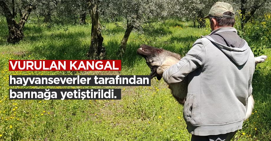 Köpeğini Vurup Ölüme Terk Etti