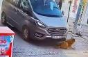 Gemlik'te bir sürücü sokak köpeğini ezip...