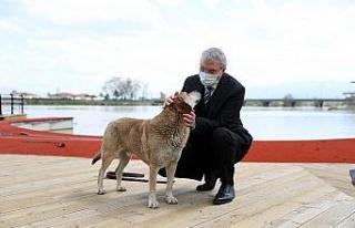 Sakarya Nehri kıyıları sosyal yaşamın yeni alternatifi...