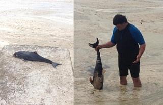 Gemlik'te ölü yunus kıyıya vurdu.!