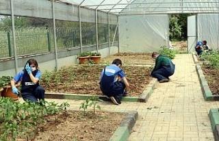 Kocaeli'de tarımsal rehabilitasyon