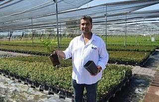 Safir Berry , uluslararası marketlerle çalışıyor