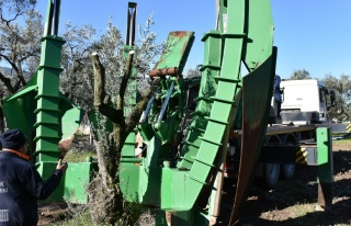 Gemlik'te belediyeden ağaç hassasiyeti