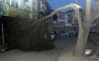 Aydın'da dikkatsiz sürücü asırlık ağaca çarptı!