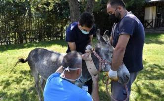 Manavgat'ta yanan eşek Bursa'da iyileştirildi