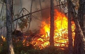 Bursa Harmancık'ta orman yangını!